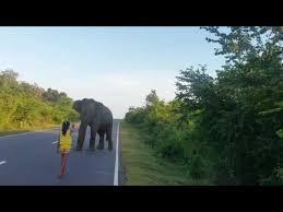 Girl Stops Elephan