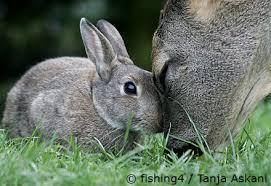 Deer & rabbit
