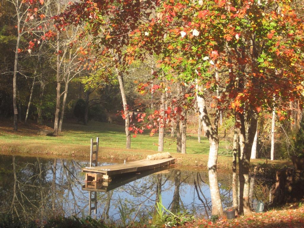 Autumn Pond 2