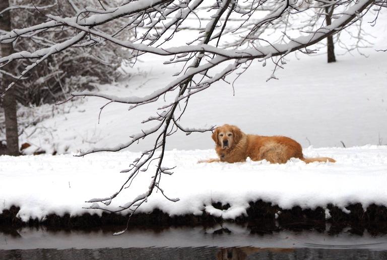 Christbel Winter Scene