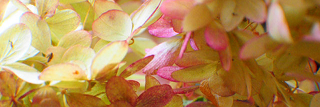 Spring Image Cropped
